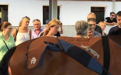 BEMER mit dem Horse Set IM FERNSEHEN!